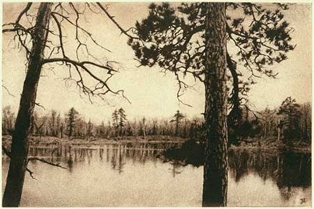 Red Pine — solarplate etching, 8x12